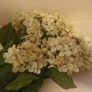 Eight Cream Hydrangea Sprays